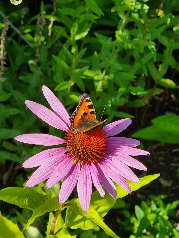 bohuslan-21-blomma